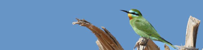 Voyages à thème ornithologie